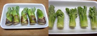 タラの芽の天ぷら1.JPG